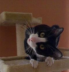 Kerstin Tekook, Katze Hilfe Krefeld, Urlaubsbetreuung Katze