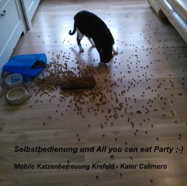 Katze Krefeld, Katze Hilfe Krefeld, Urlaubsbetreuung Katze