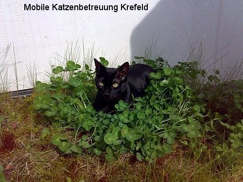 Katze Krefeld, Katze Hilfe Krefeld, Tiersitter Krefeld